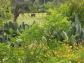 A quelques cactus près
